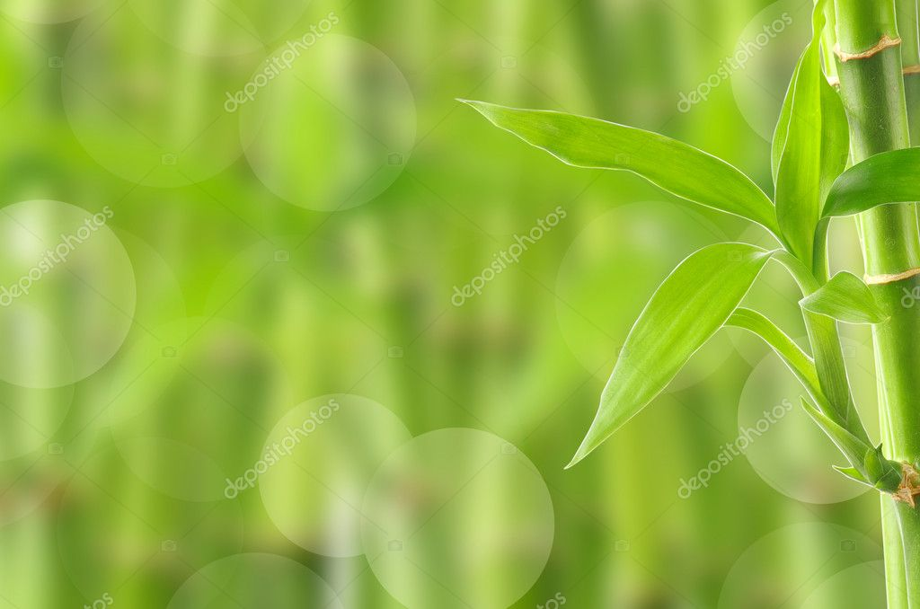 Bamboo background  Foto Stock #9512705