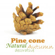 Pine cone isolated on white, clipping path included - Stock Photo