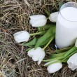 Glass of milk and white tulips on hay — Stock Photo #9399323