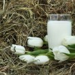 Glass of milk and white tulips on hay — Stock fotografie
