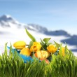 Easter basket with eggs and tulips in spring mountains — Stock Photo