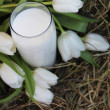 Glass of milk and white tulips on hay — Stock Photo #9562739