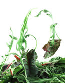 Rucola and Chard salad lightness concept — Stock Photo