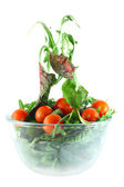 Rucola, Chard and tomatoes salad lightness concept — Stock Photo