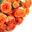 Orange roses on white — Stock Photo