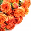 Orange roses on white - Stock Photo