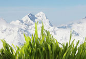 Spring grass in mountains — Stock Photo