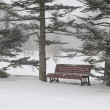 Stock Photo: Bench in a park