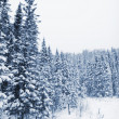 Trees covered of snow — Stock Photo