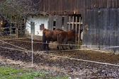 Two Horses Eating At A Stable — Stock Photo