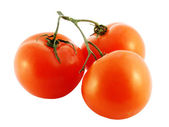 The branch of tomatoes on a white background. — Stock Photo
