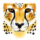 Cheetah face — Stock Vector