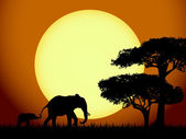Elephants at sunset — Stock Vector