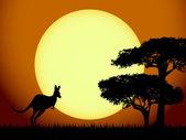 Kangaroo at sunset — Stock Vector