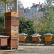 Hives in city — Stock Photo #10532465