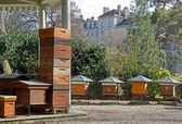 Hives in the city — Foto Stock