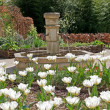 A field of white tulips and fountain. - 图库照片