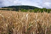 Eet veld en groene heuvels — Stockfoto