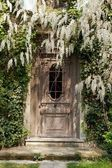 Door at the wisteria — Stock Photo