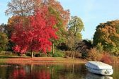 Red maple in autumn — Stock Photo