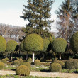 Shrubs boxwood, French garden. — Stock Photo