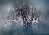Swamp in mist — Stock Photo