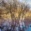 Bare trees in marshland — Stock Photo