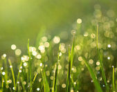 Grass with rain drops — Stock Photo
