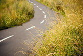 Asphalt bicycle path in a field — Stock Photo