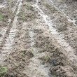 Stock Photo: Muddy road