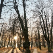 Back lit trees — Stock Photo #8246198