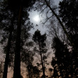 Trees in moonshine — Stock Photo