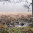 Swamp in fog — Stock Photo #8247232