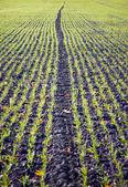 Plowed field in autumn — Stock Photo