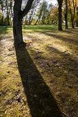 Shadow of a tree — Stock Photo