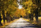 Avenue in fall — Zdjęcie stockowe