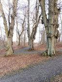 Bare trees — Stock Photo