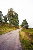 Проселочная дорога — Стоковое фото