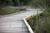 Wooden path over a swamp area — Stock Photo