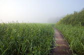 Footpath in a swamp area — Stock Photo