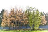 Trees in spring — Stock Photo