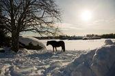 Конь зимой — Стоковое фото