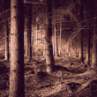 Photo: Spooky forest