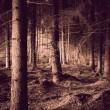 Stock Photo: Spooky forest