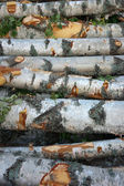 Stack of birch trees — Stock Photo