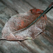 Stock Photo: Leaf with hoar frost