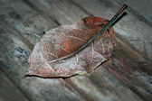 Leaf with hoar frost — Stock Photo
