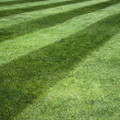 Stripy lawn — Stock Photo