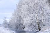 Rivière avec des arbres en hiver — Photo