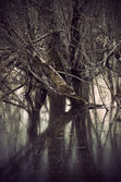 Trees in swamp — Stock Photo